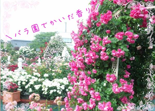 薔薇園でかいだ香り